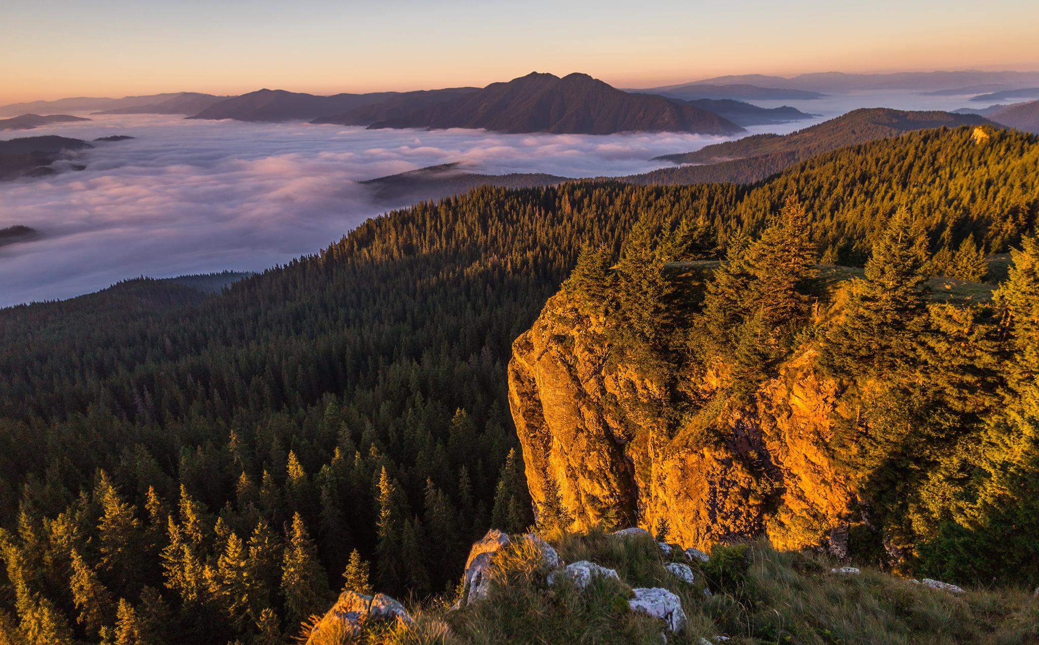 Păduri din Bucovina. Foto Cătălin Urdoi