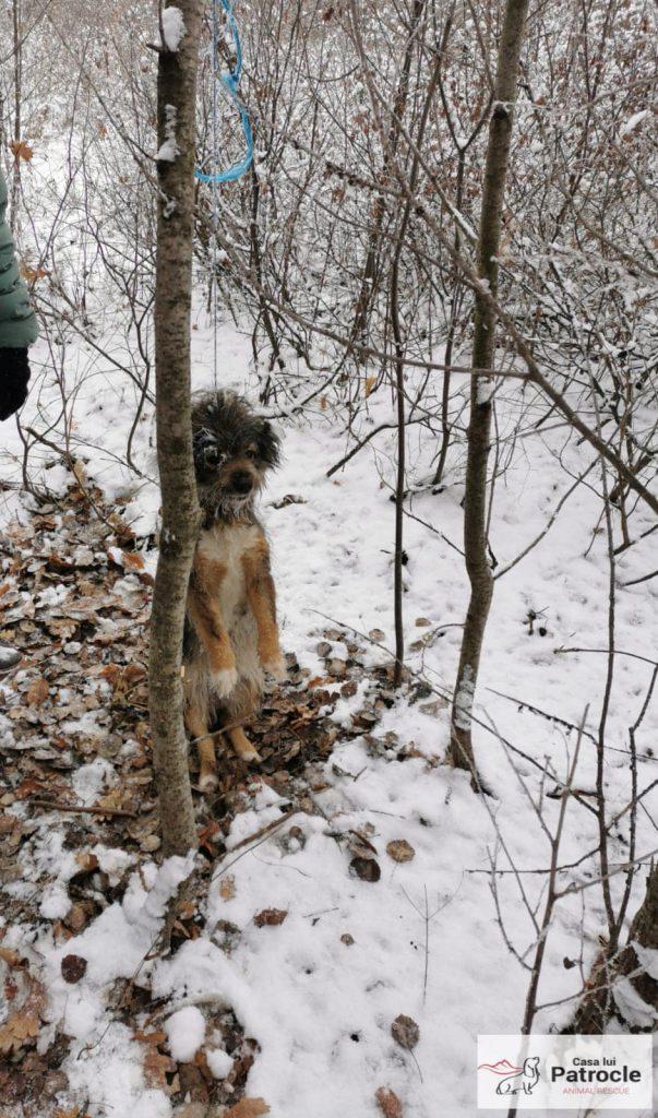 Bonțuca a fost spânzurată într-o pădure de la marginea satului